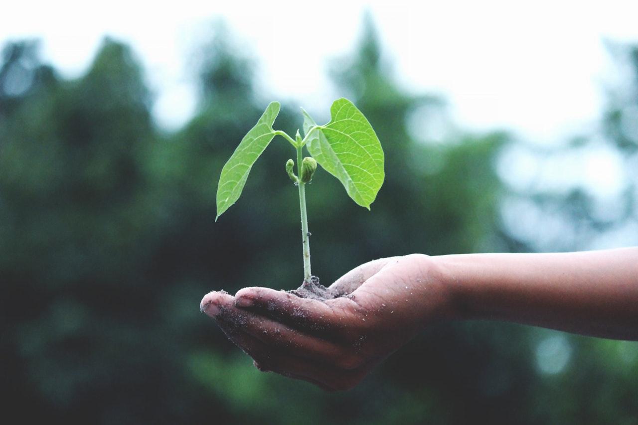 pflanzliche Potenzmittel